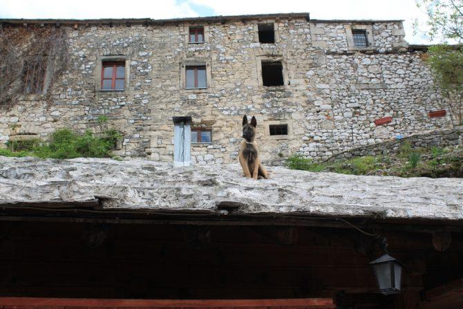 Pas na vrućem mostarskom krovu